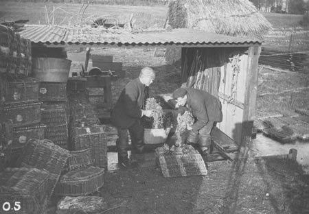Original Photo Of Watercress Packing